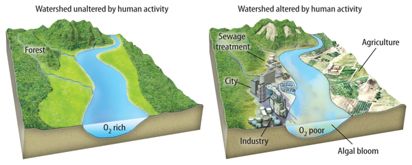 How do human activities affect the water cycle? | Welcome ...