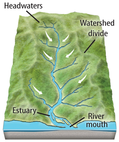 """how does human activity in watersheds Key learning objectives: """"how does human activity impact ecological communities"""" students will examine populations of plants and animals that utilize the petaluma river as part of their habitat they will survey and monitor select populations they will use modeling to predict how human activities, such."""