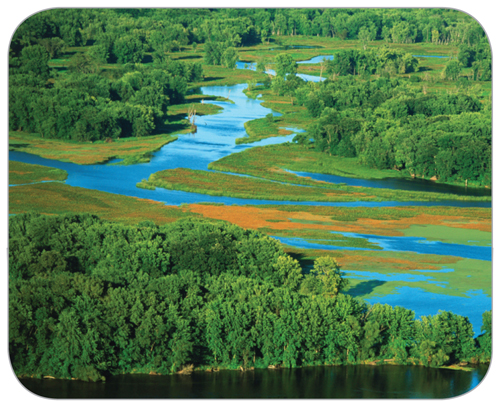Aerial view of the Mississippi River flowing through green, lush wetlands and trees.