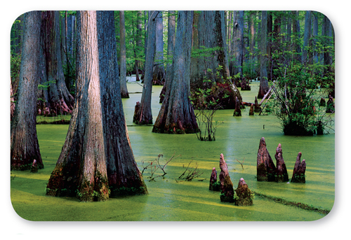 Photograph of a swamp