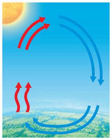 Diagram of convection with arrows moving in a clockwise direction; blue arrows are poining downward, and red arrows are pointing upward.