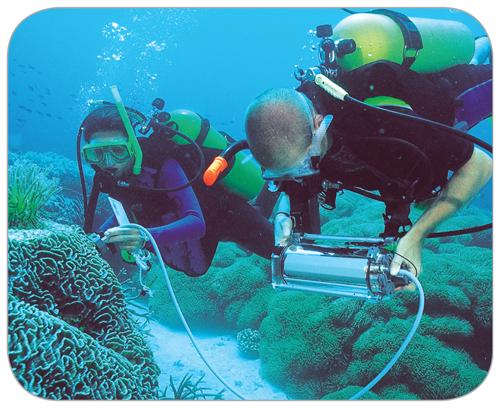 Photograph of two men wearing scuba equipment in the ocean collecting data about corals in waters