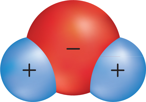 Illustration of a water molecule. The oxygen atom has a negative charge, and the two hydrogen atoms have positive charges.