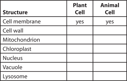 Example of a three-column table used to comapre the structures in plant and animal cells