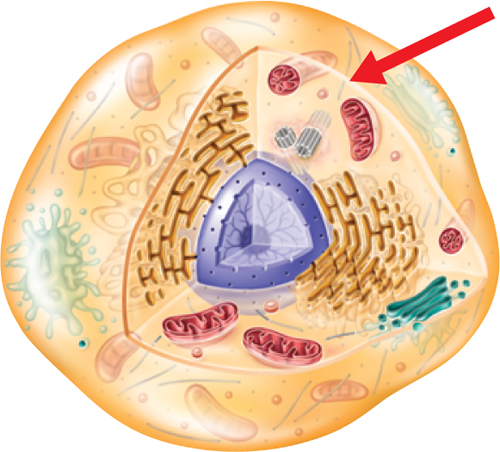 Marsh Science 7th Cell Structure And Function