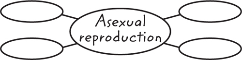 Example of a graphic organizer with the center oval labeled Asexual Reproduction and four ovals branching off around it