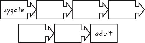 Esample of a graphic organizer using horizontal boxes connected by arrows