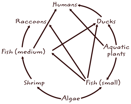 Illustration of a food web with many animals interconnected to each other.