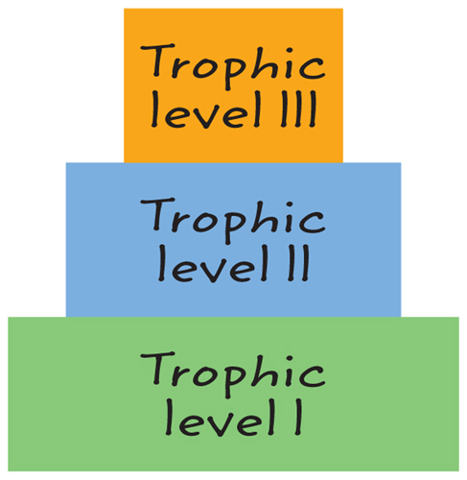 Illustration showing the hierarchy of trophic levels.