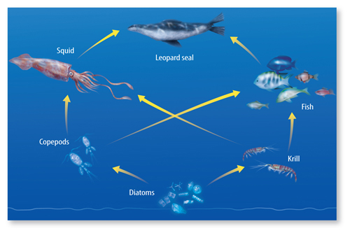 Producers of chemosynthesis