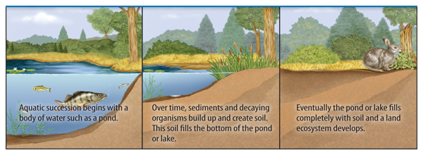 an overview of ecological succession A quick overview of ecological succession, for 7th grade created for hbus distance learning course.