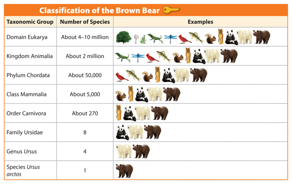 Classifying Living Things | MarshScience7 Bear Species Chart