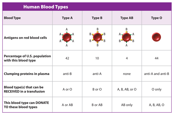 Thomas C Marsh Preparatory Middle School 7th Grade Science – Blood Type Worksheet